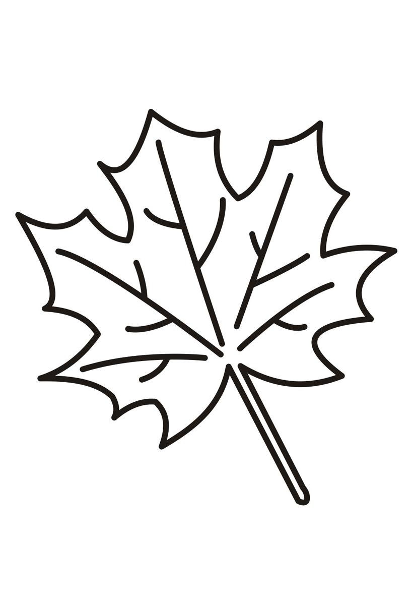 Раскраска Падающий кленовый лист распечатать или скачать ...