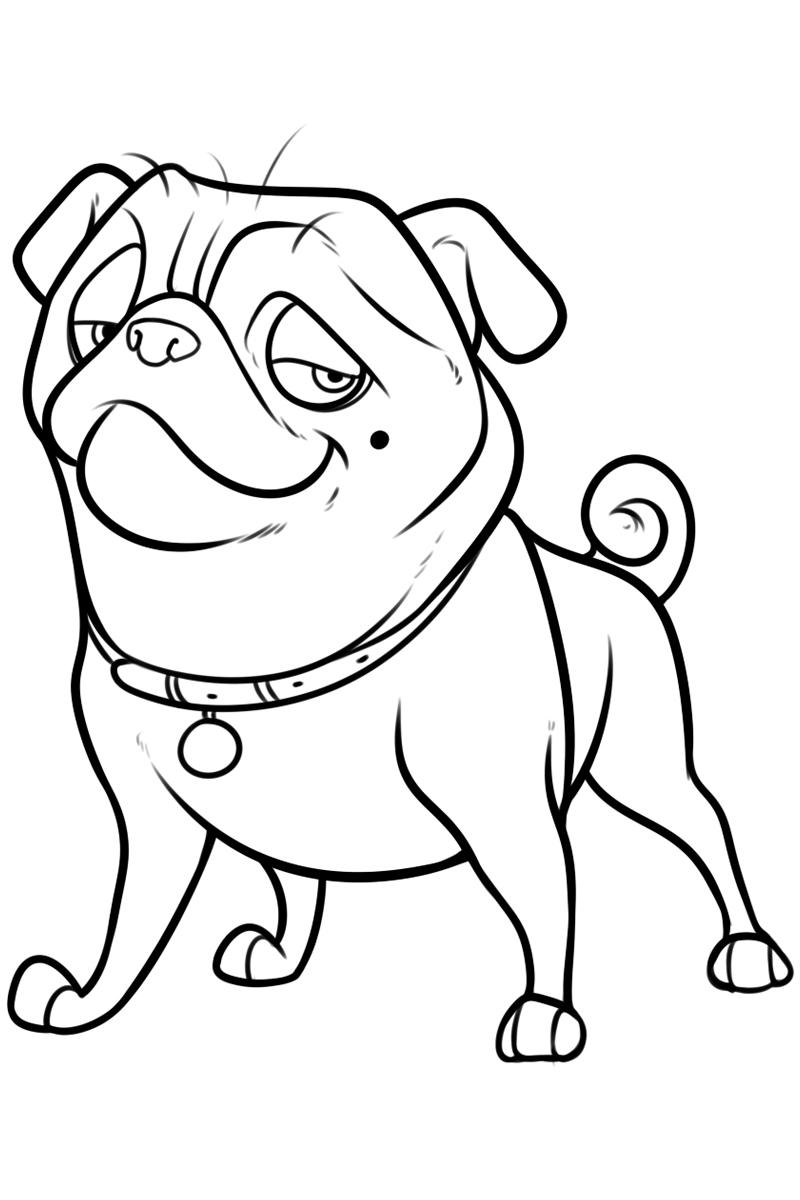 Раскраска Собачка из Реальной белки распечатать или ...