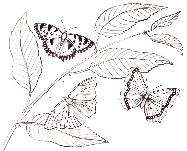 Бабочки на ветке рисунок
