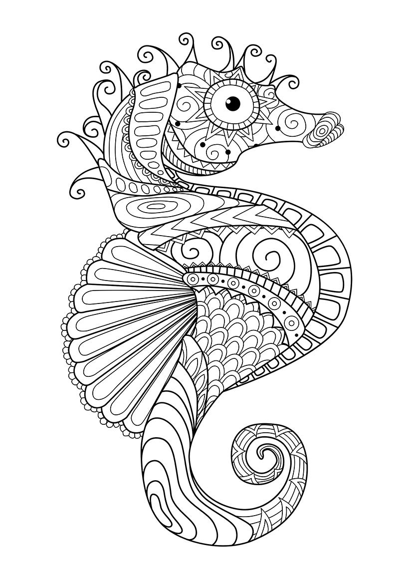 Раскраска Морской конёк распечатать или скачать бесплатно