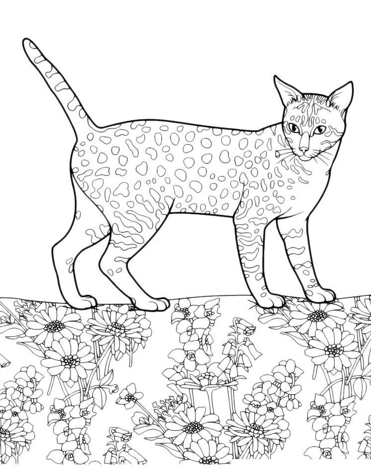 Раскраска Пятнистая кошка распечатать или скачать бесплатно