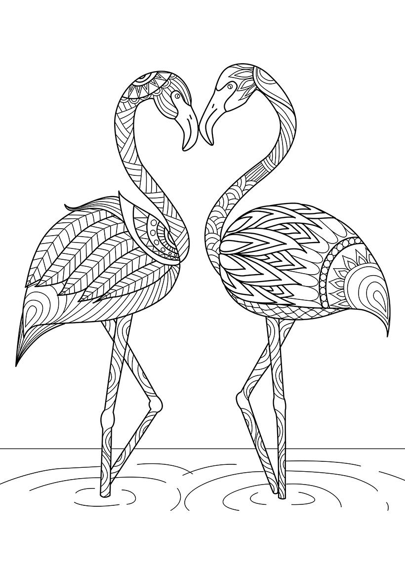Раскраска Фламинго распечатать или скачать бесплатно