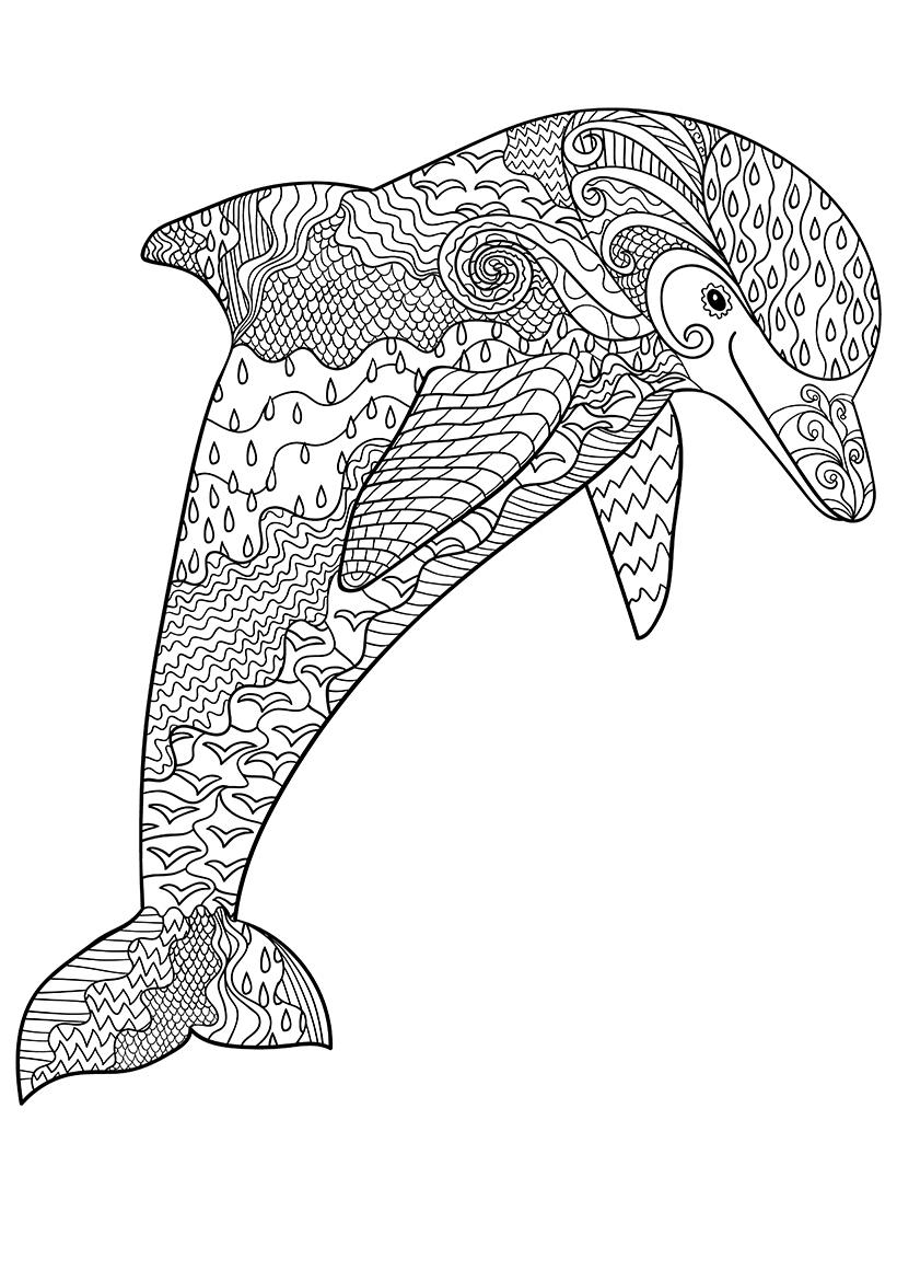 Раскраска Дельфин распечатать или скачать бесплатно