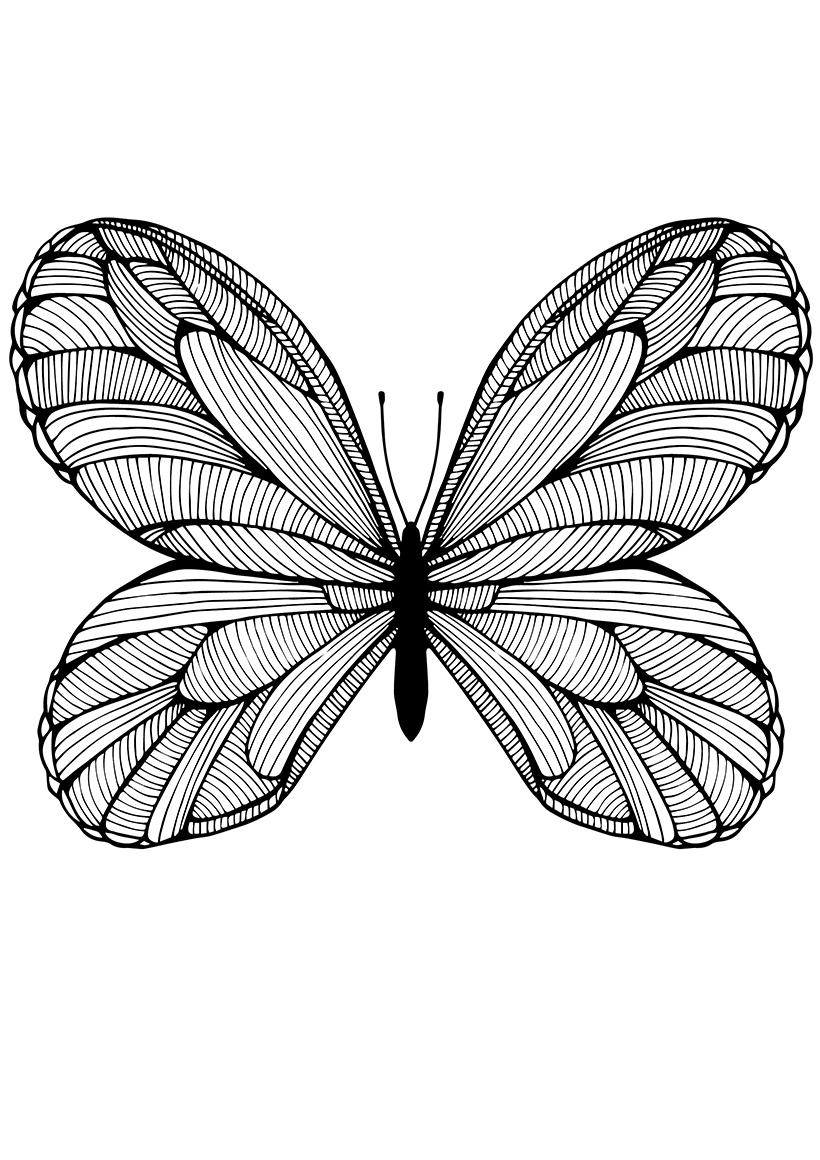 Раскраска Полосатая бабочка распечатать или скачать бесплатно