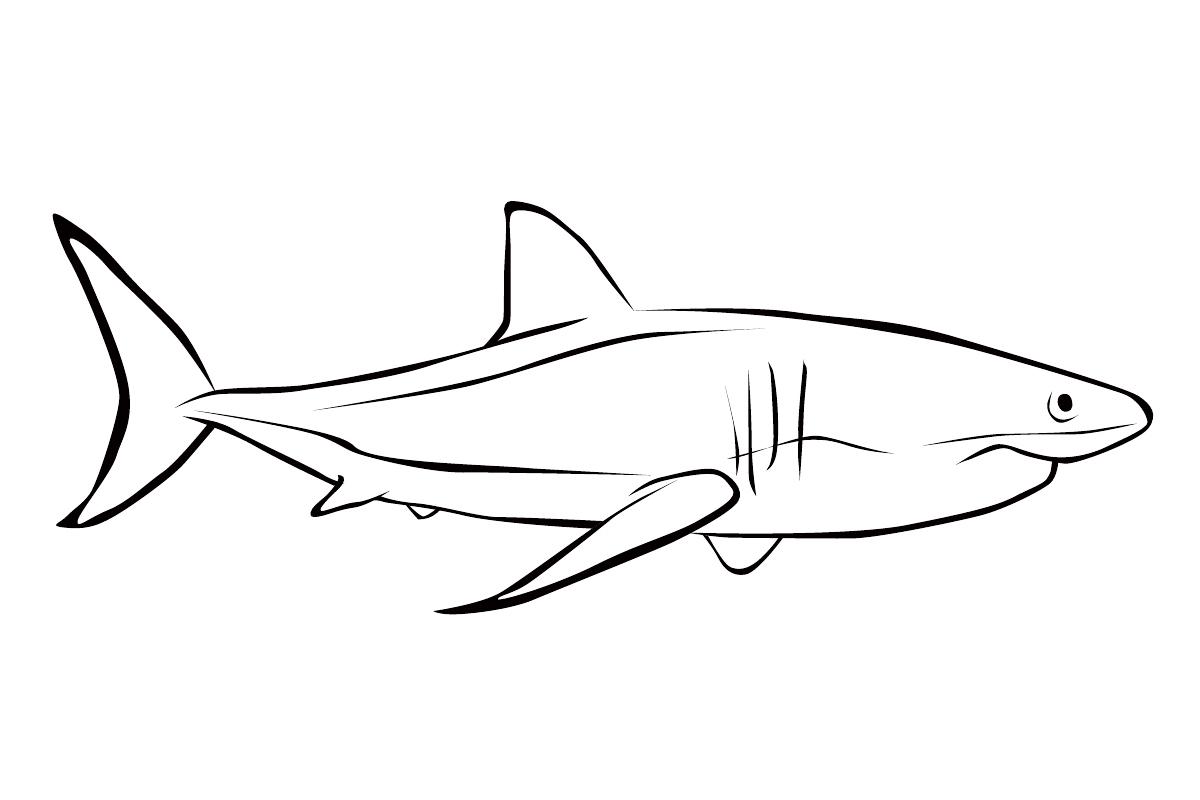 Картинки для раскрашивания акула распечатать