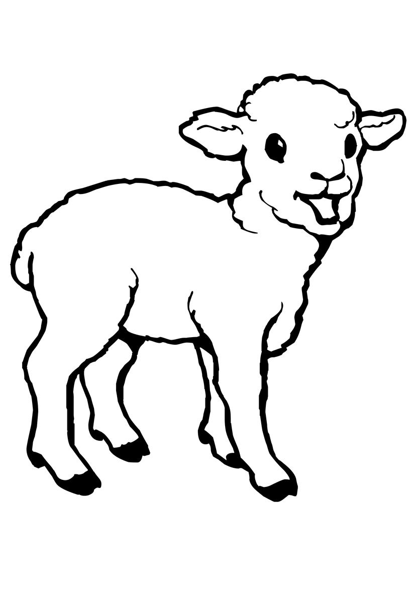 Раскраска Молодой барашек распечатать или скачать бесплатно