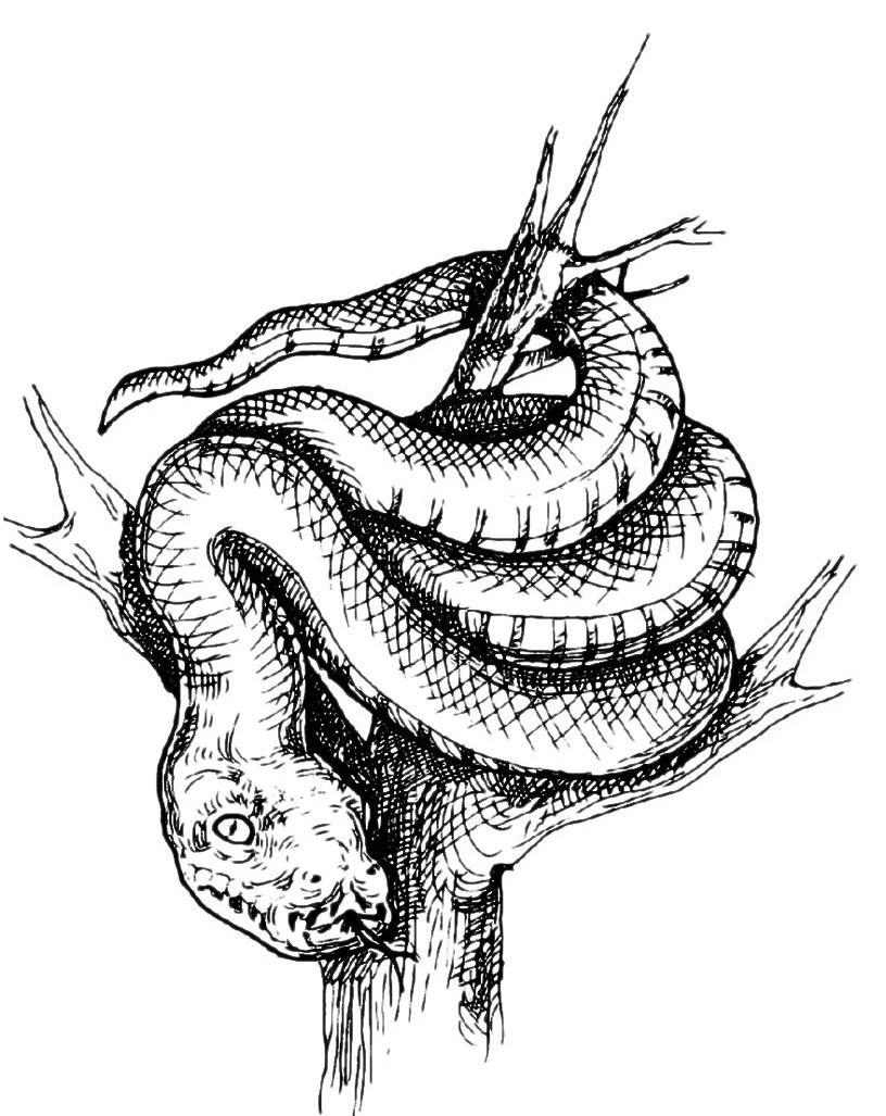 Раскраска Королевская змея на дереве распечатать или ...