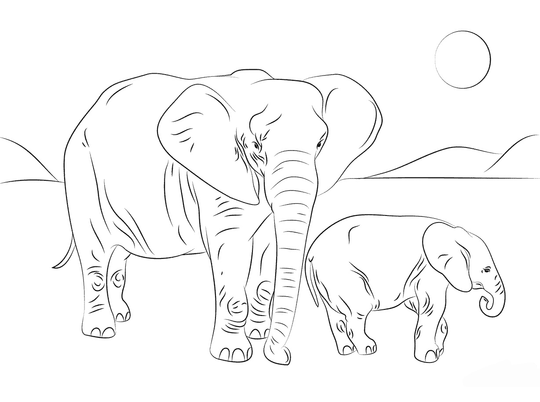 раскраска африканский слон с семьёй распечатать или скачать