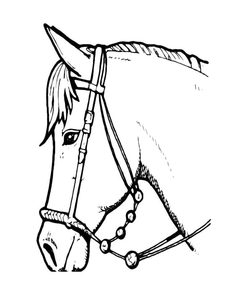 Раскраска Голова лошади распечатать или скачать бесплатно
