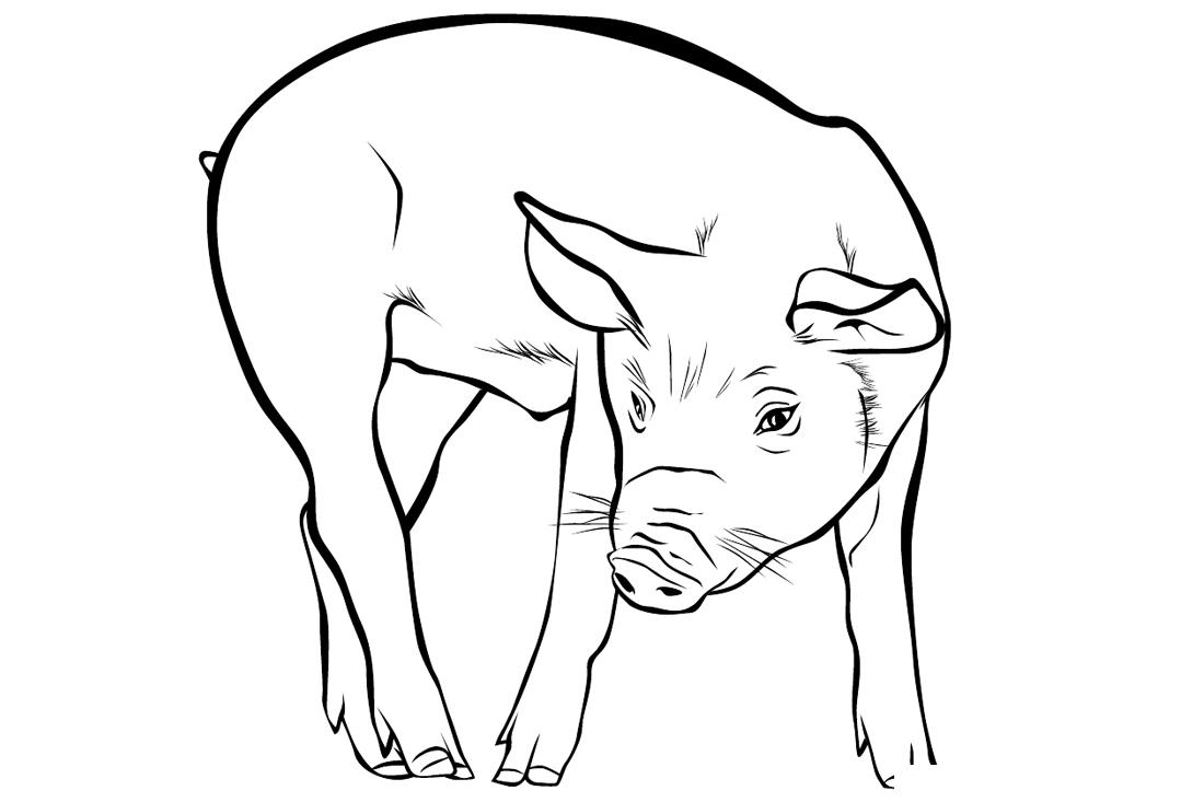 Раскраска Свинья распечатать или скачать бесплатно