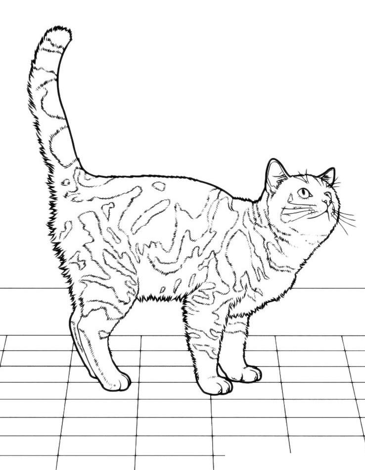 Раскраска Кошка на кухне ждет обеда распечатать или ...