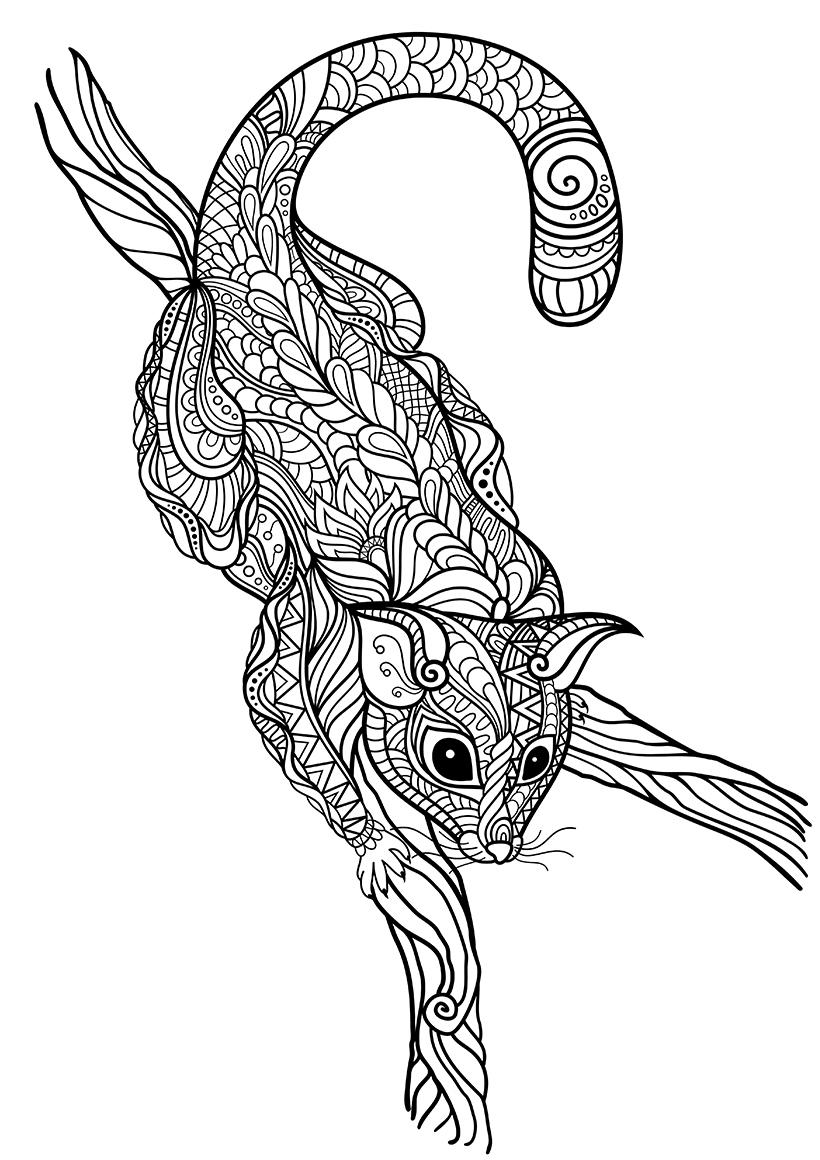 Раскраска Опоссум на ветке распечатать или скачать бесплатно