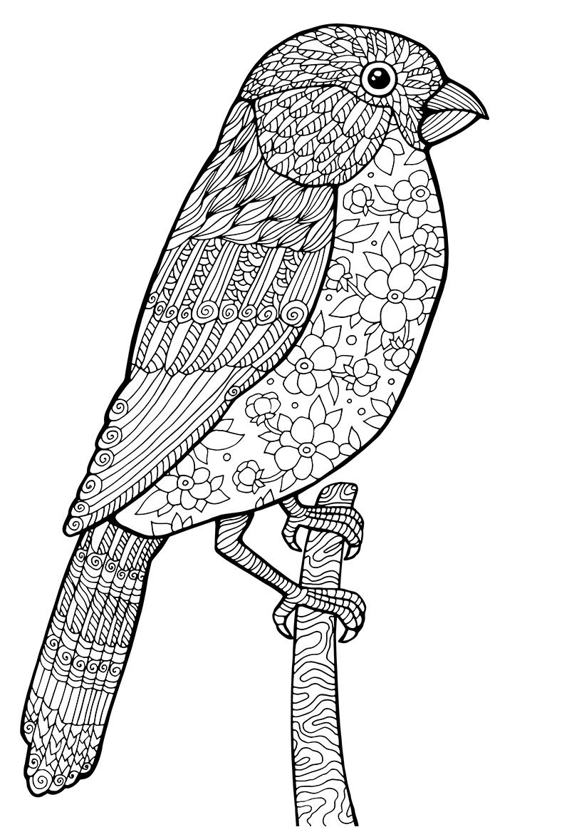 Раскраска Птица на ветке распечатать или скачать бесплатно