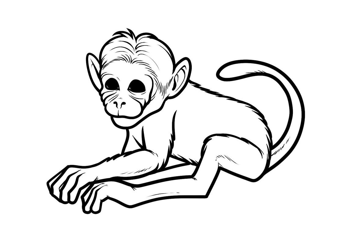 Раскраска Простая обезьяна распечатать или скачать бесплатно