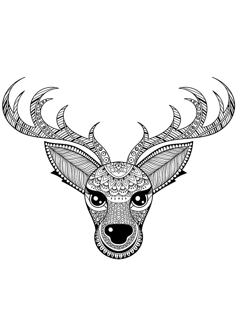Раскраска Северный олень распечатать или скачать бесплатно