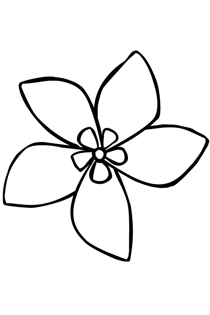 Рисунок цветы карандашом для детей