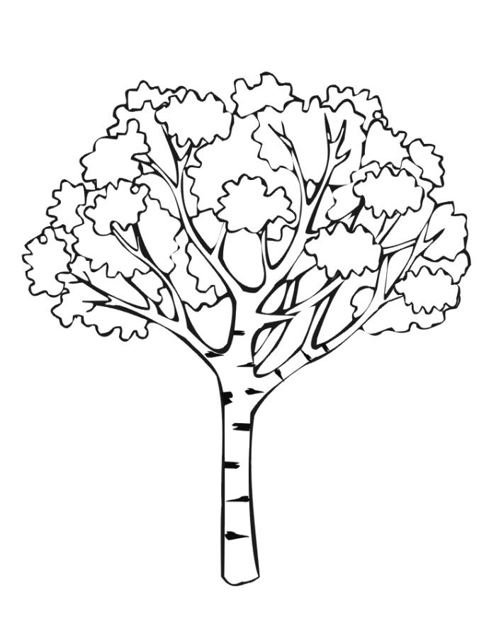 Раскраска Дерево осенью распечатать или скачать бесплатно