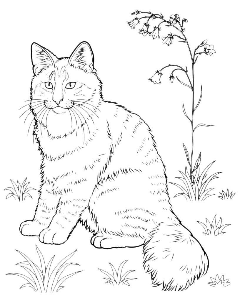 Раскраска Кот и колокольчики распечатать или скачать бесплатно