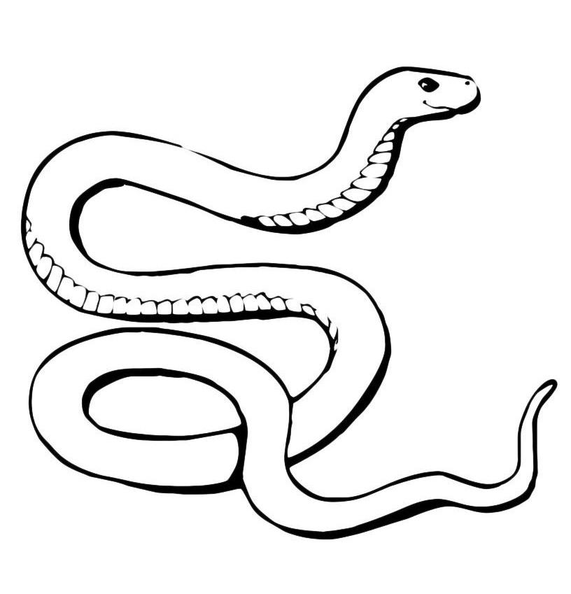 Картинки змеи контур