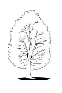 Раскраска Дерево большое и маленькое распечатать или ...