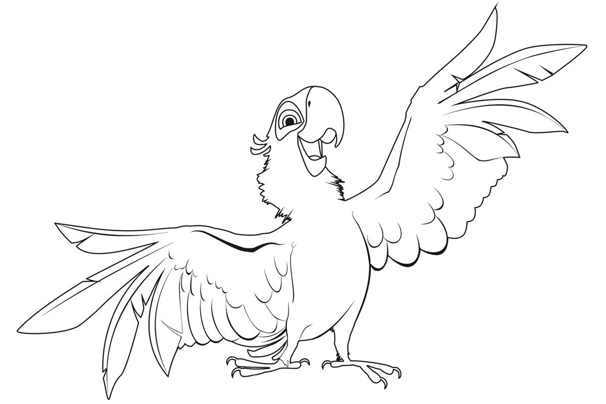 раскраска попугай голубчик распечатать или скачать бесплатно