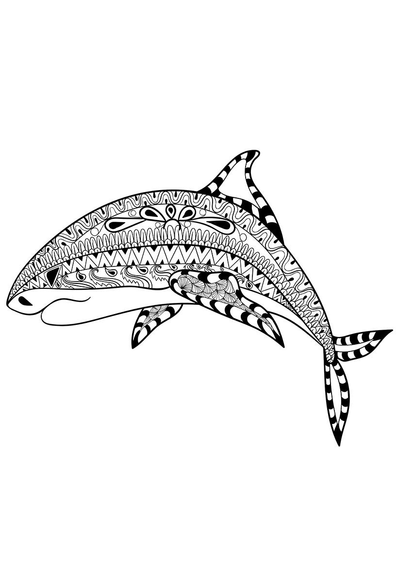 Раскраска Акула распечатать или скачать бесплатно
