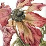 Сказка про розу и лотос