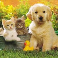 Песни про животных для самых маленьких